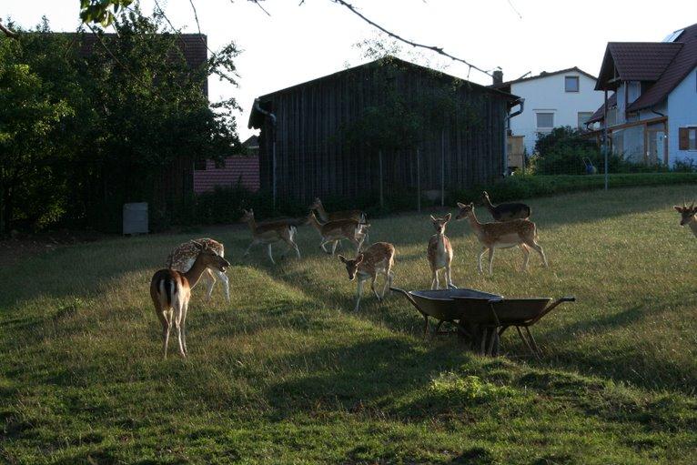 Bilda von : August 2008